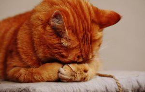 Bahan-Bahan Ini Berbahaya Bagi Kucing Anda, Waspadalah