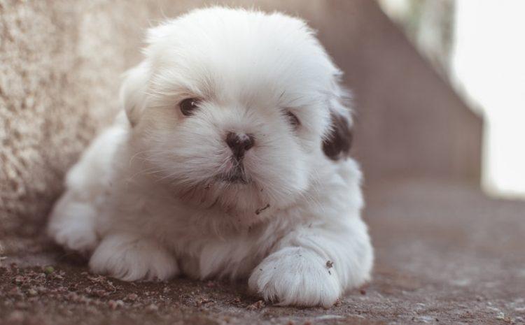 Cara Sederhana Merawat Anak Anjing