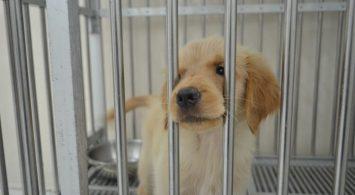 Mengenal Penyakit Canine Parvo Virus (CPV) yang Sangat Menular dan Mematikan Bagi Anak Anjing (Puppy)